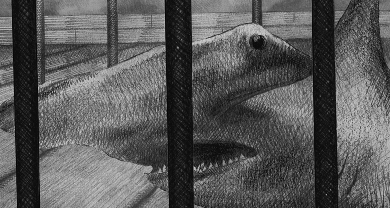 Pencil drawn image of a hammerhead shark in a cage on a ship taken from the visual narrative the Limerickee